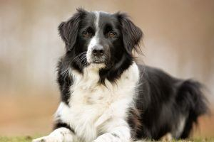 These Are the Easiest Dog Breeds to Train for Agility