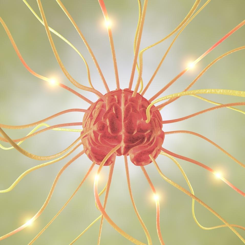 Brain nerves