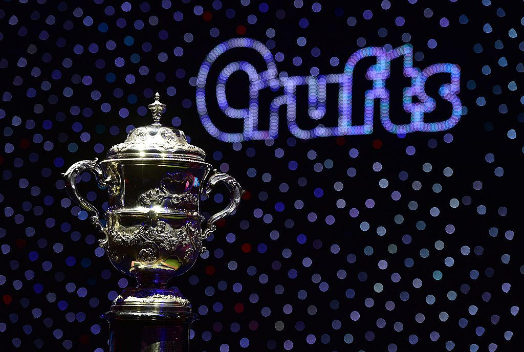 The trophy for the Best in Show category awaits the winner at the Crufts Dog Show