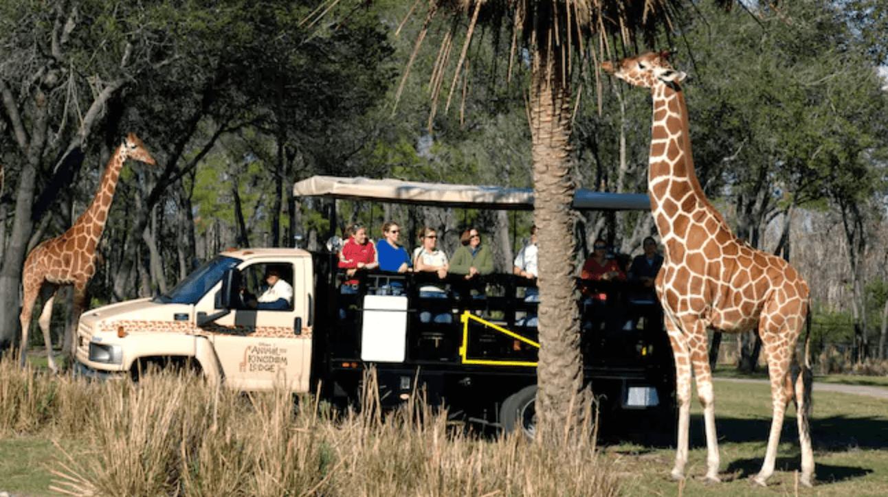 Disney safari