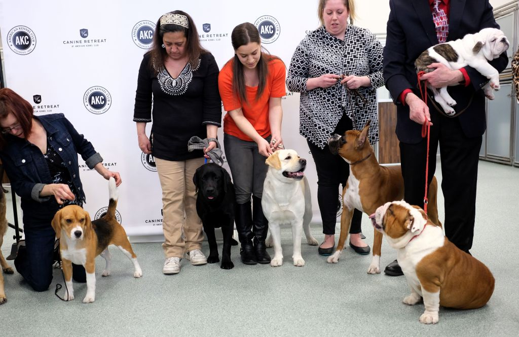 group of dogs and their handlers