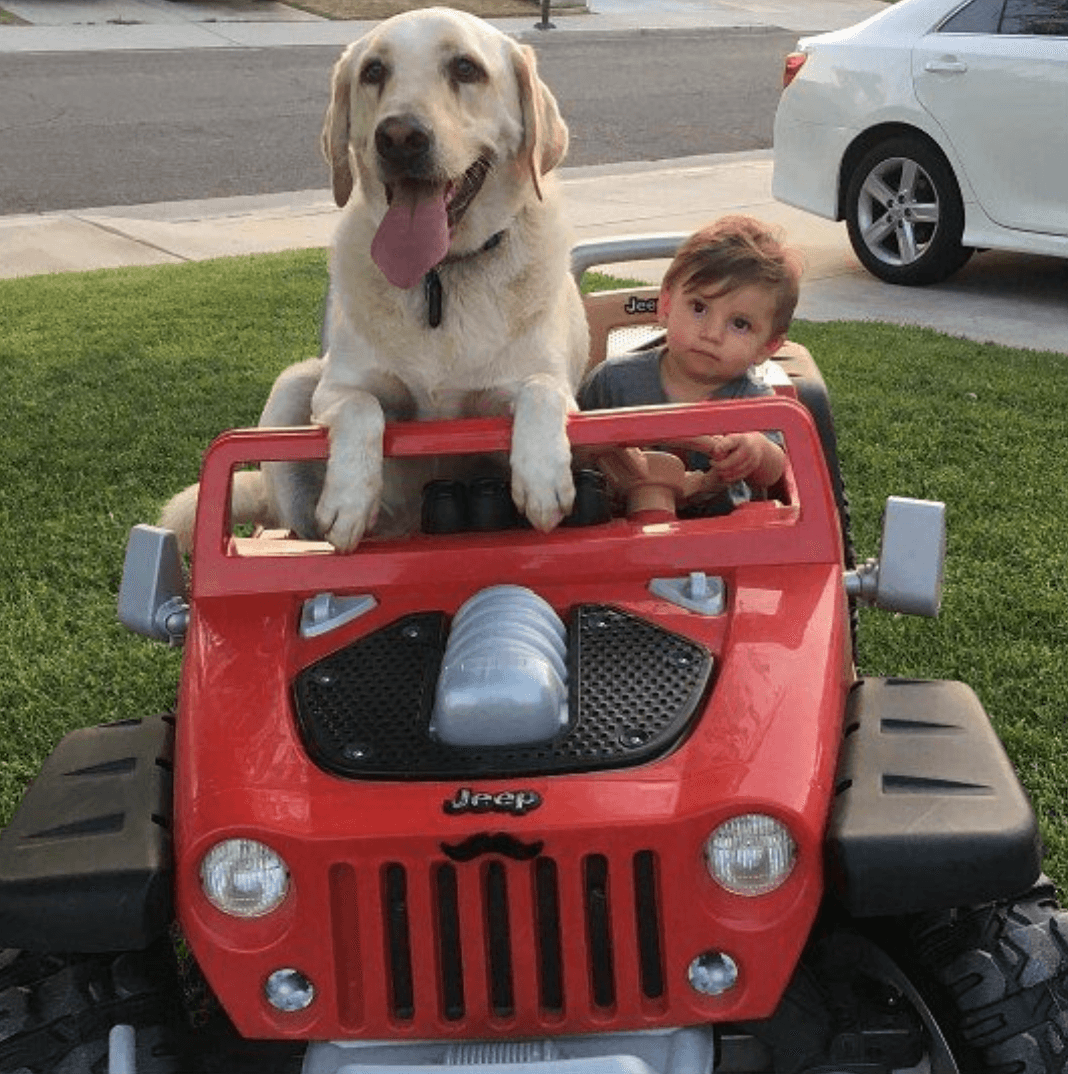 Dog and baby in toy car