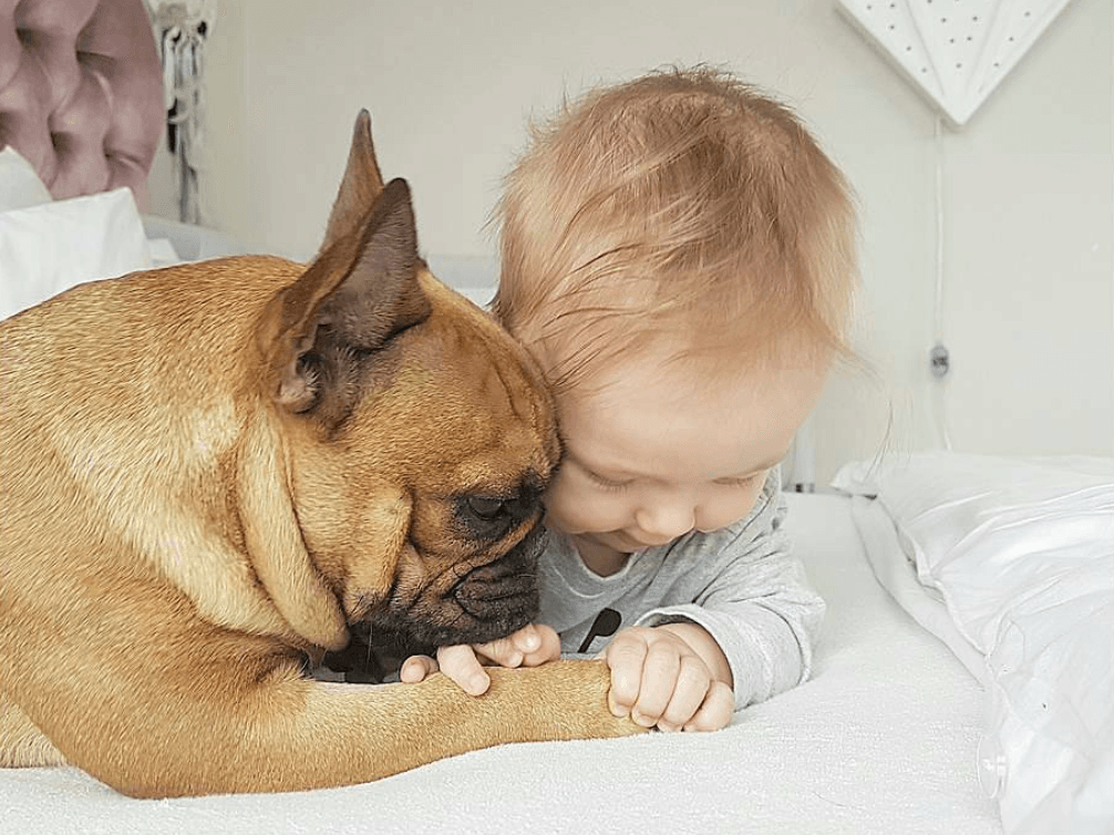 Dog and baby playing