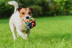 15 Questions to Ask Before You Adopt a Shelter Pet