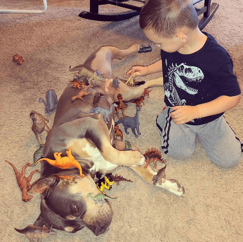 Dog with dinosaurs and kid