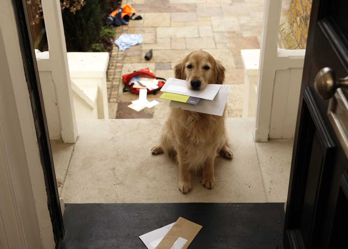 Golden retriever dog sitting at front door with letters in mouth