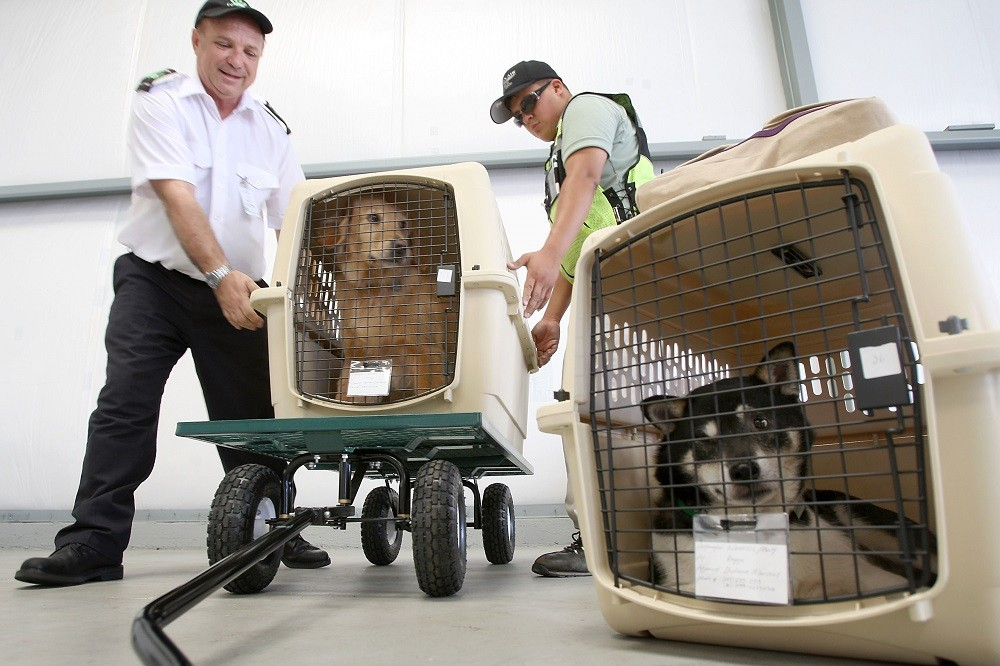 President and CEO Don Weisel (L) helps load pets for take-off