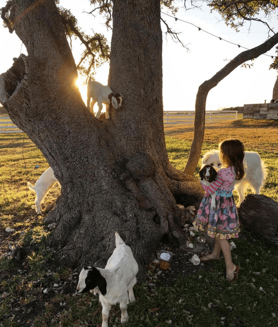 Emmie gaines tree goats