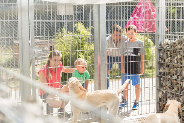 Family getting to know dogs in animal shelter.