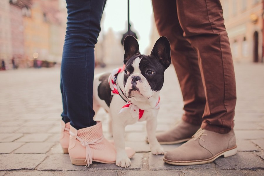 cute dog and couple
