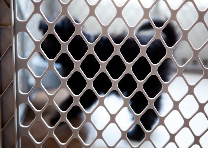 puppy behind a gate