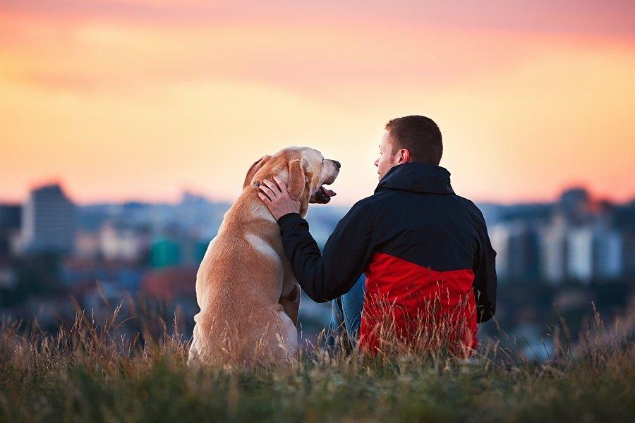 Labrador with a man