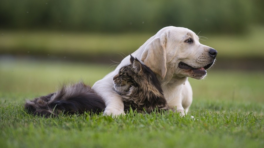 dog and cat on the grass