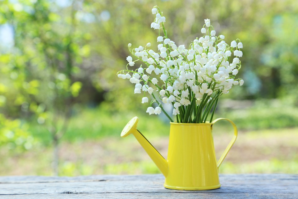 Lily of the Valley in watering can