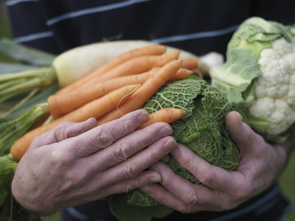Senior man holding vegetables, close-up