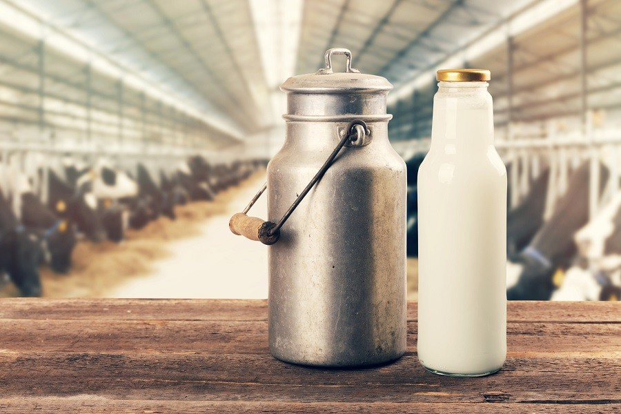 Fresh bottle of milk with a can in a cowshed