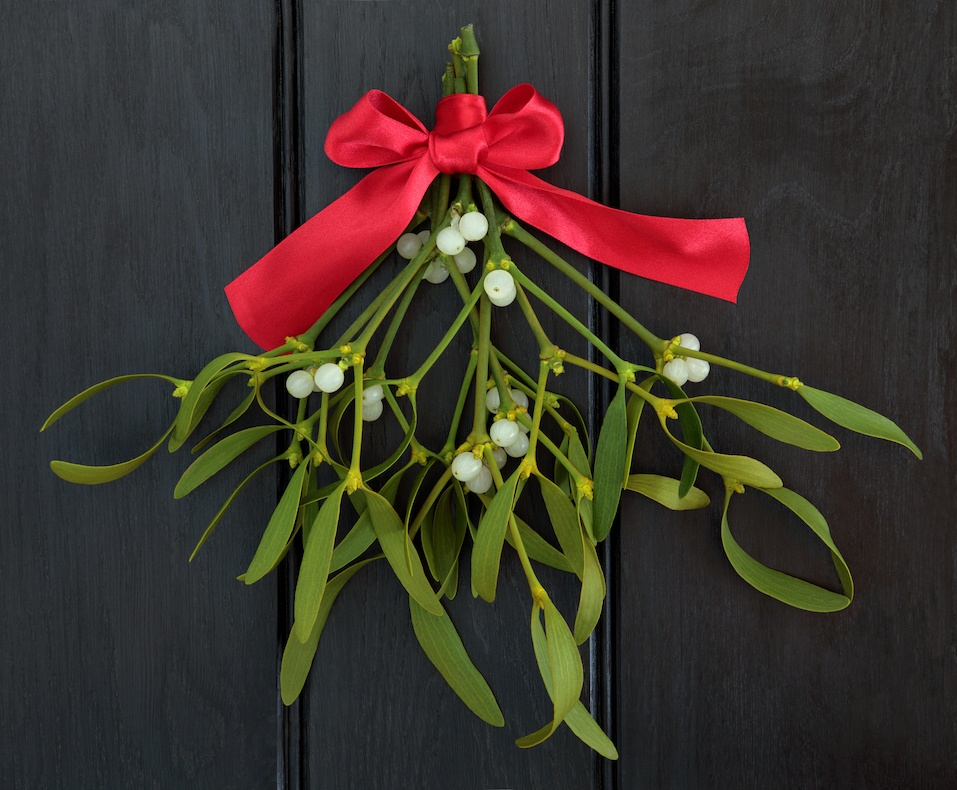 Christmas mistletoe with red ribbon bow