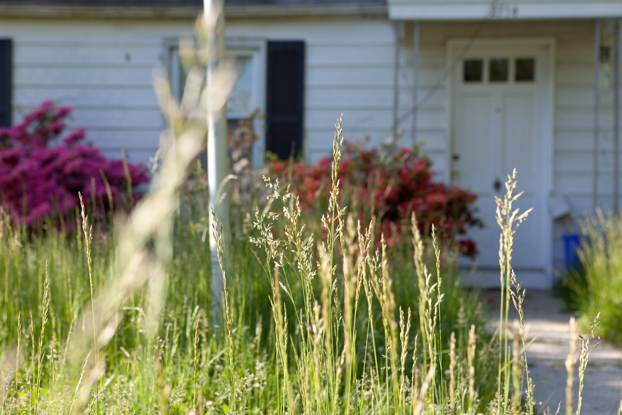 Long Grass Outside Abandoned Cape Cod Single Family Home Maryland