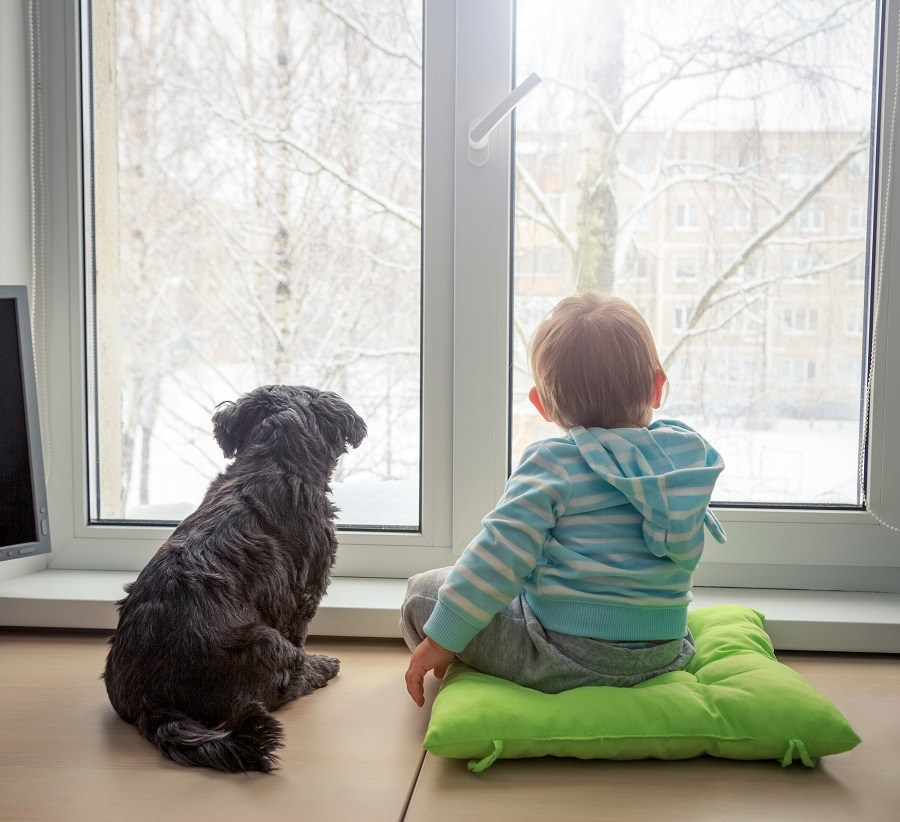 Puppy and a boy indoors