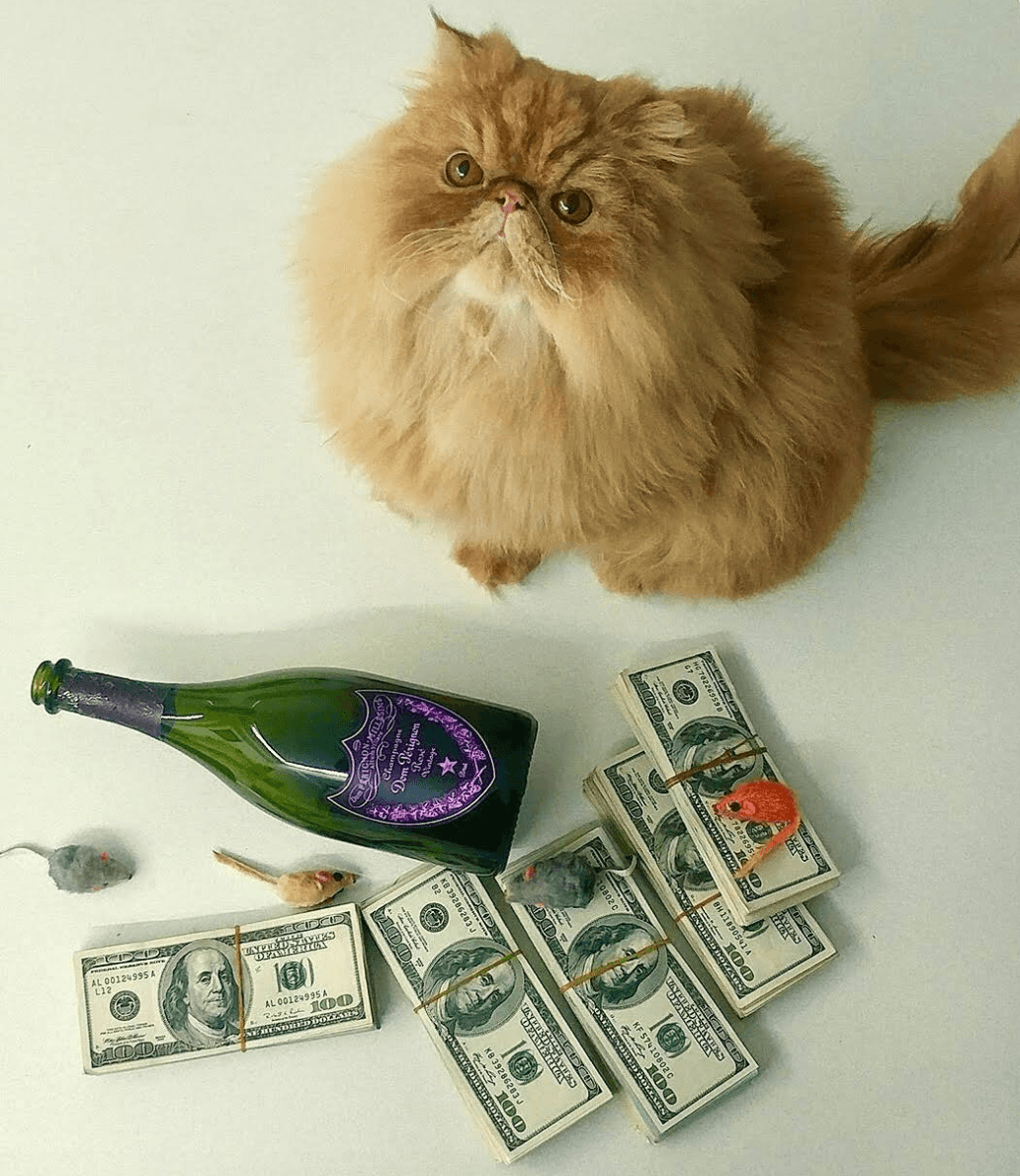 Rich kid cat with money