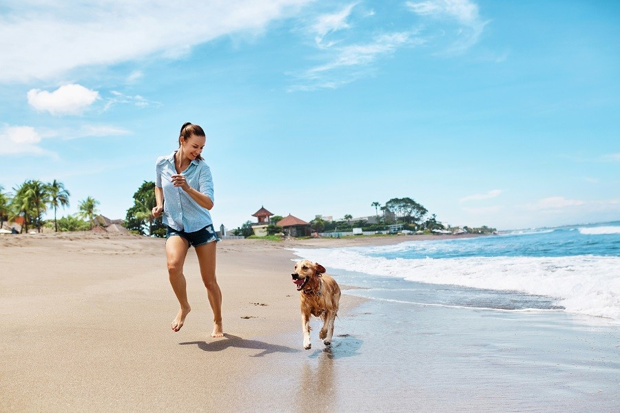 How To Teach Dog To Walk Without Leash