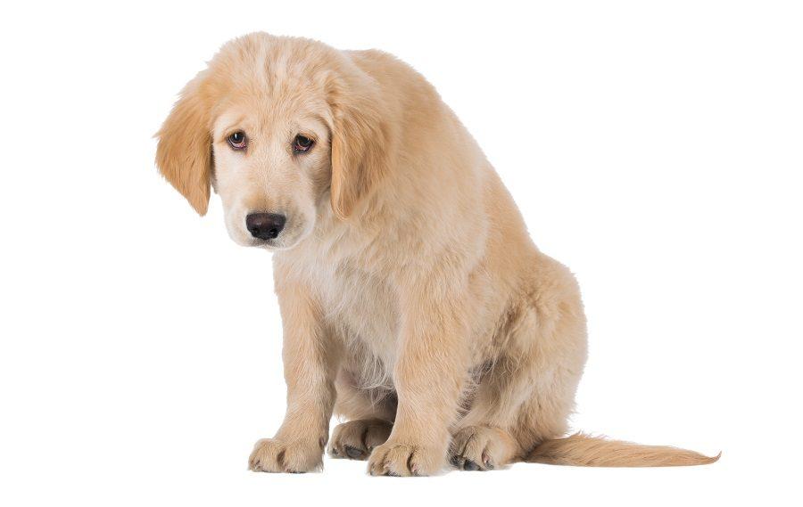 Puppy looking sad