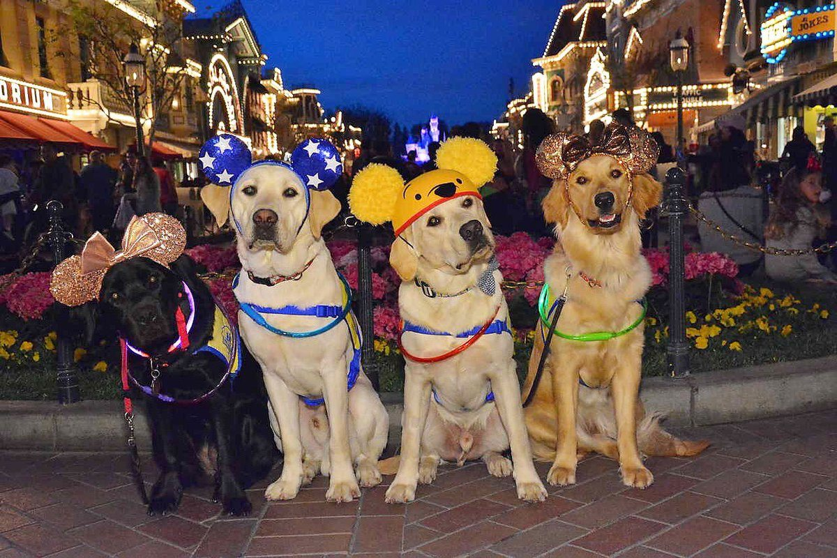 Canine Companions service dogs at Disney at night