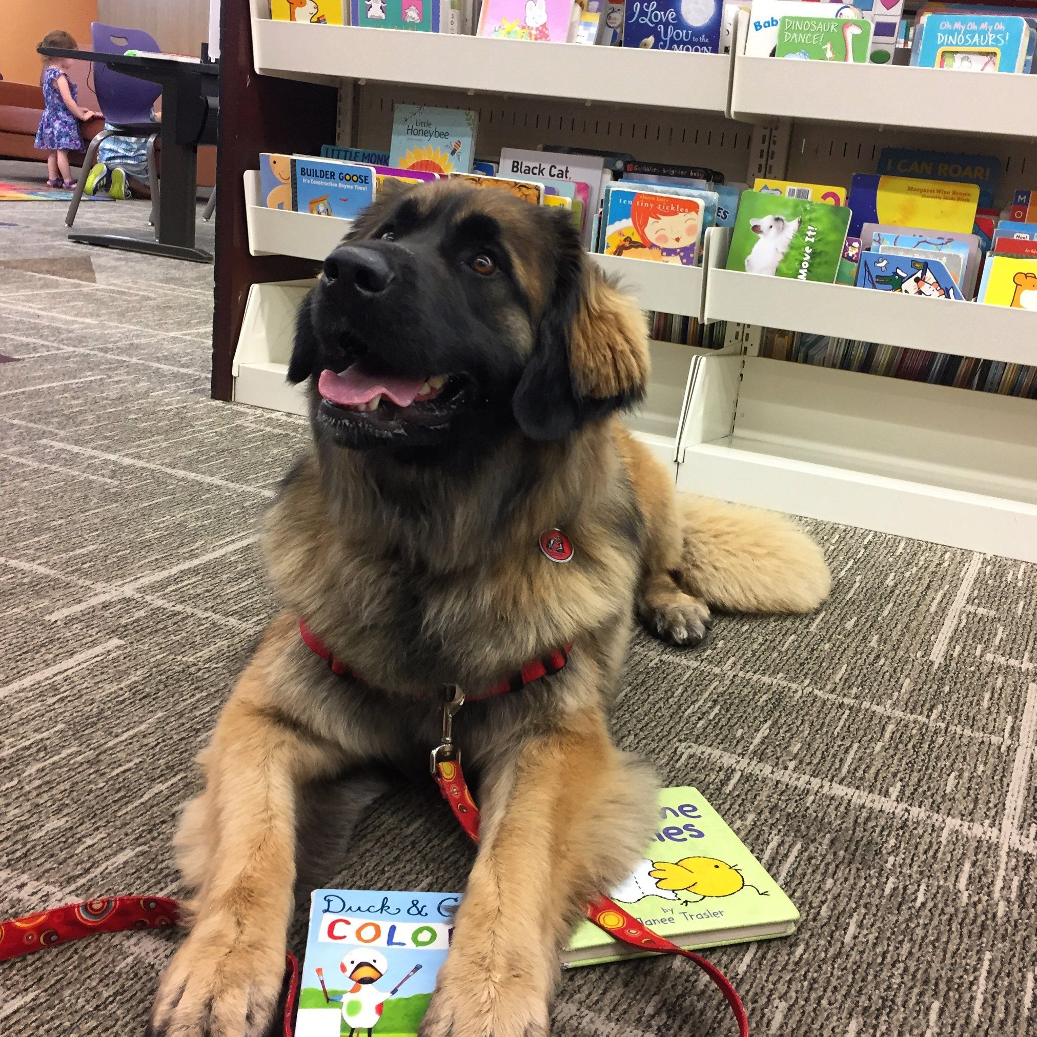 Service dog reading library