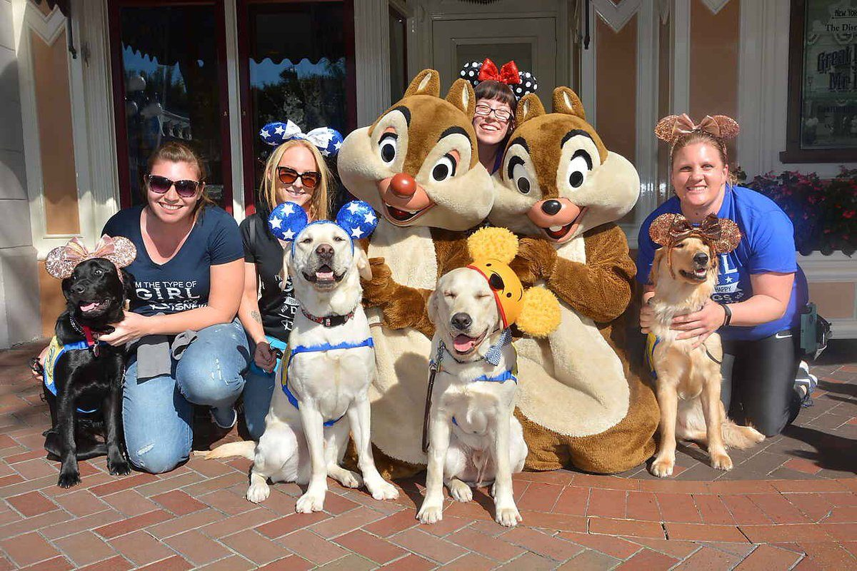 Canine Companions service dogs at Disney with chip and dale
