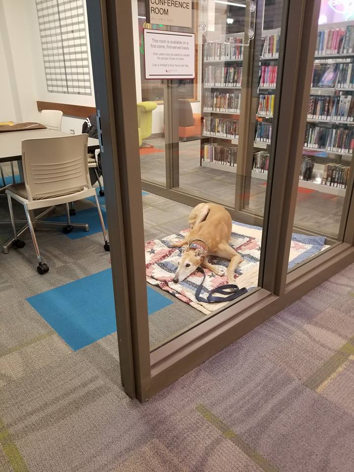 Sting dog library