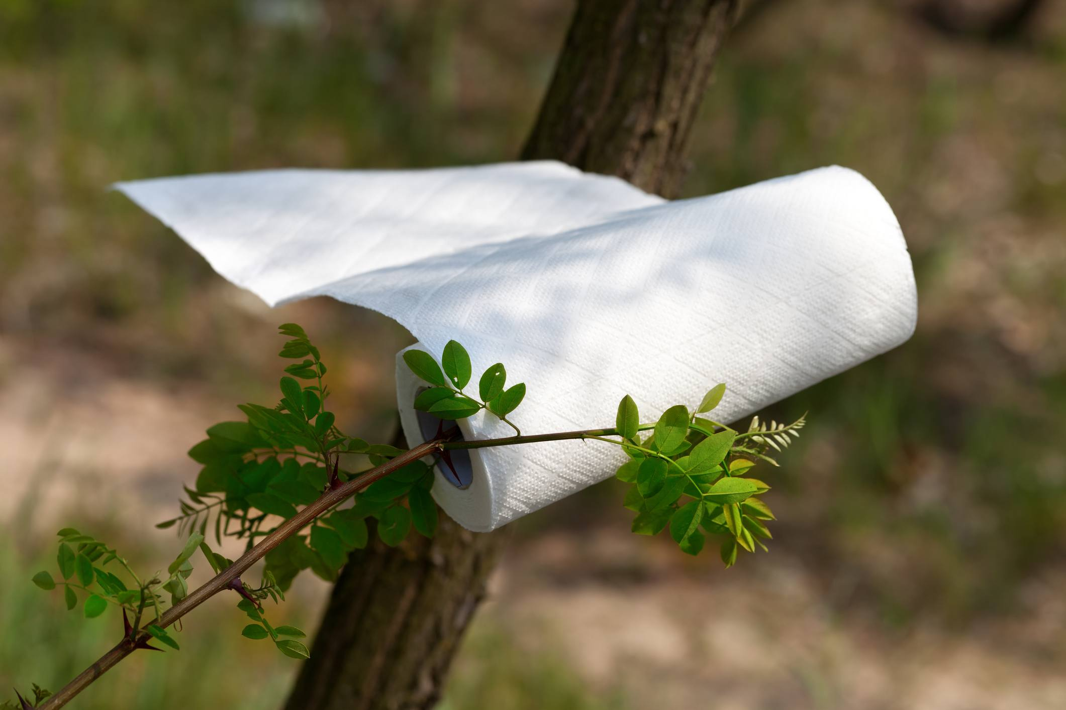 Paper towel roll waving in the wind in forest at sun day