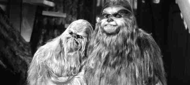 Chewie and Malla