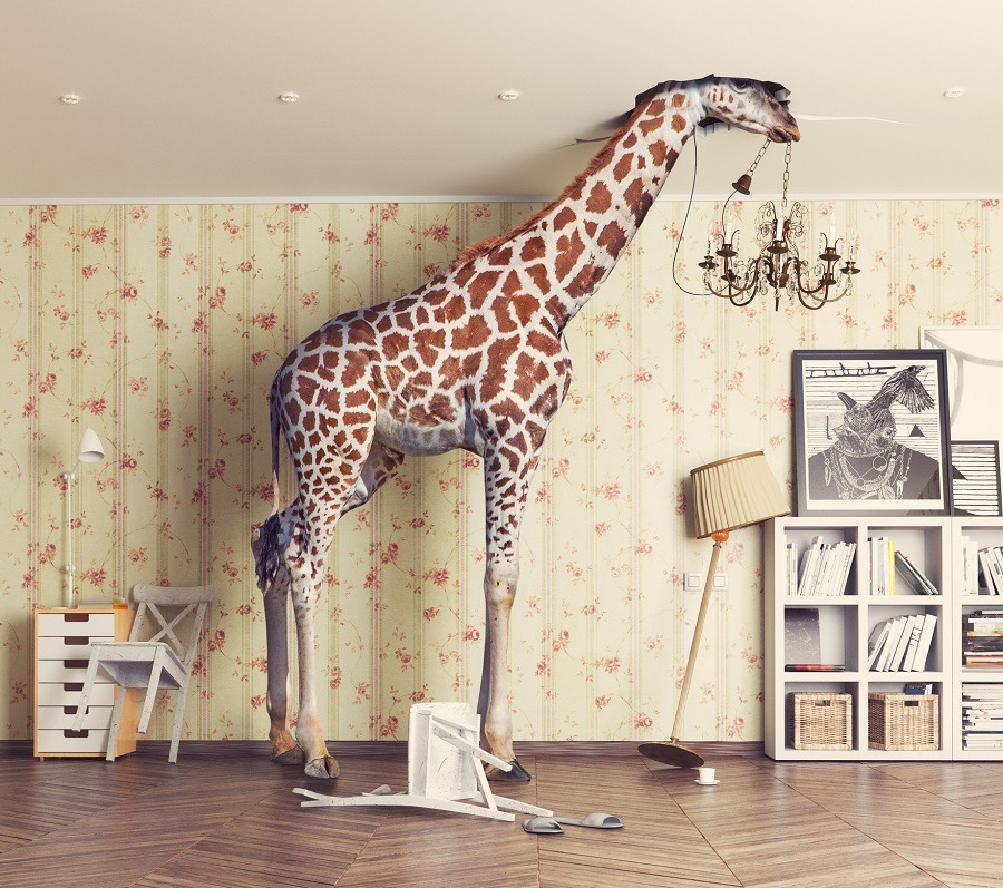 giraffe breaks the ceiling in the living room