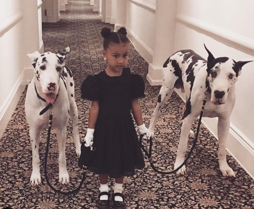 North West and dogs