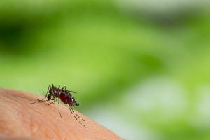 Mosquito Myths You Should Never Believe