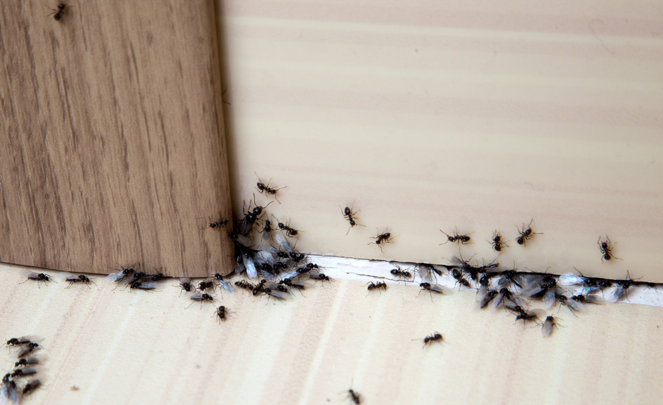 15 Common Pests That Are Destroying Your Home