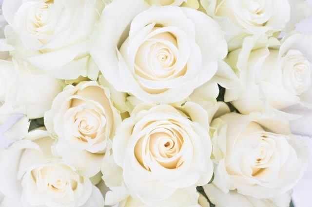 Close up of white roses.