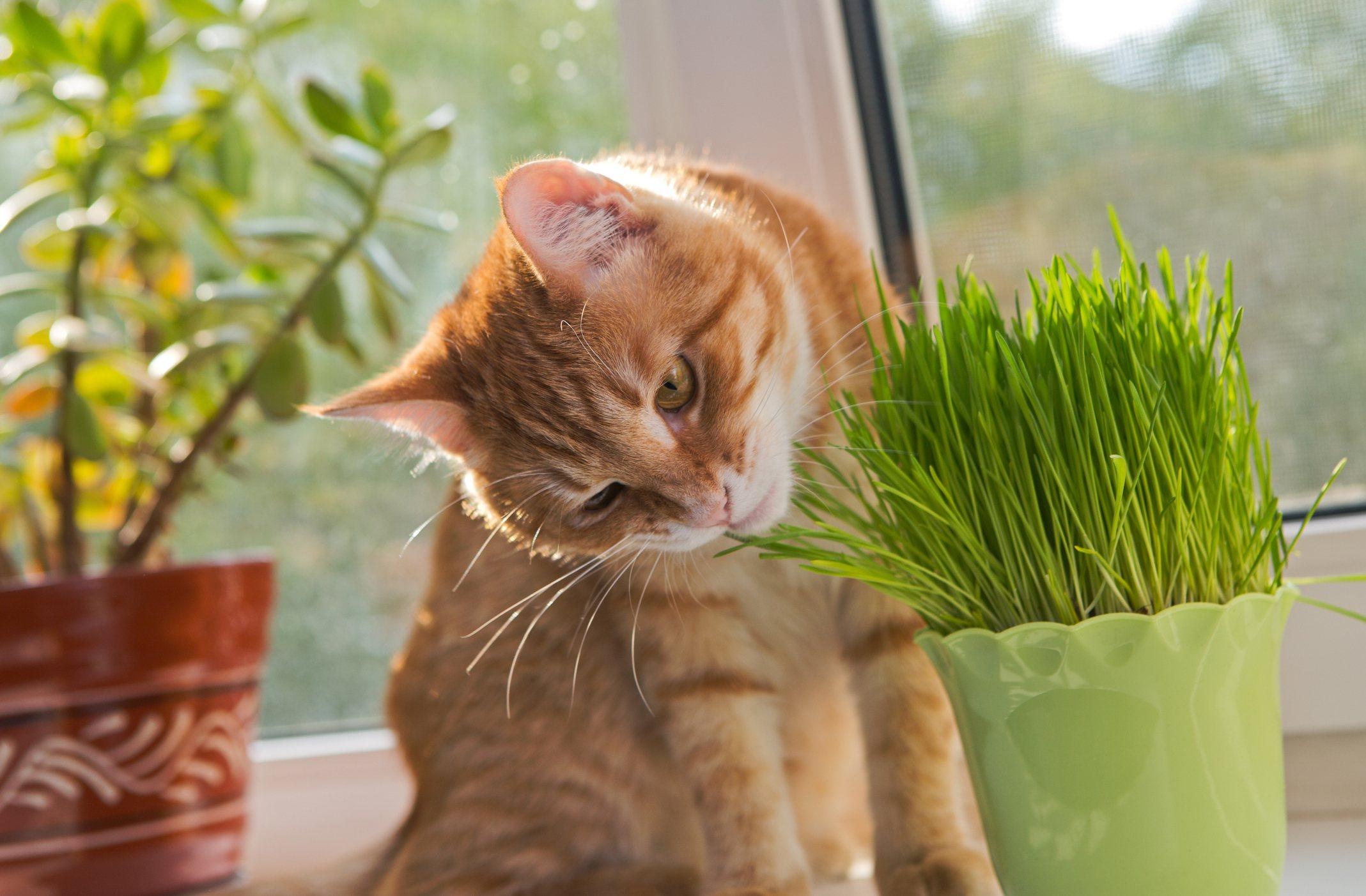 Cat and vase of fresh catnip