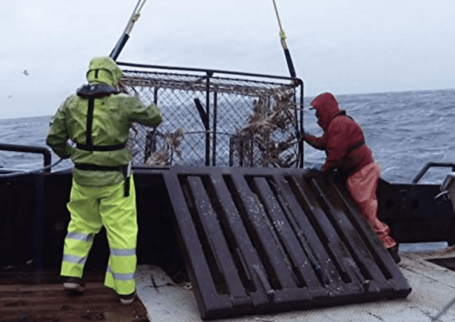 Two fishermen pulling up a metal crate.