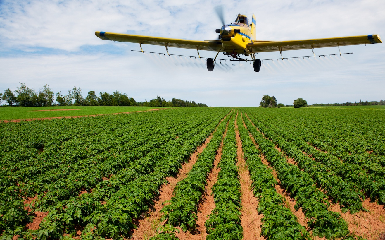 Yellow plane dusting green crops on a large farm