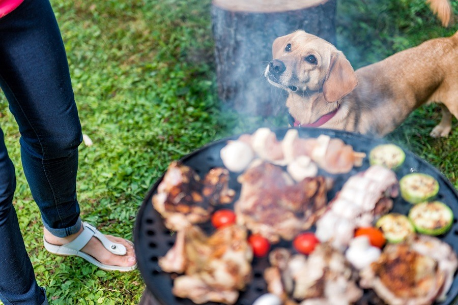 Dog standing with grill