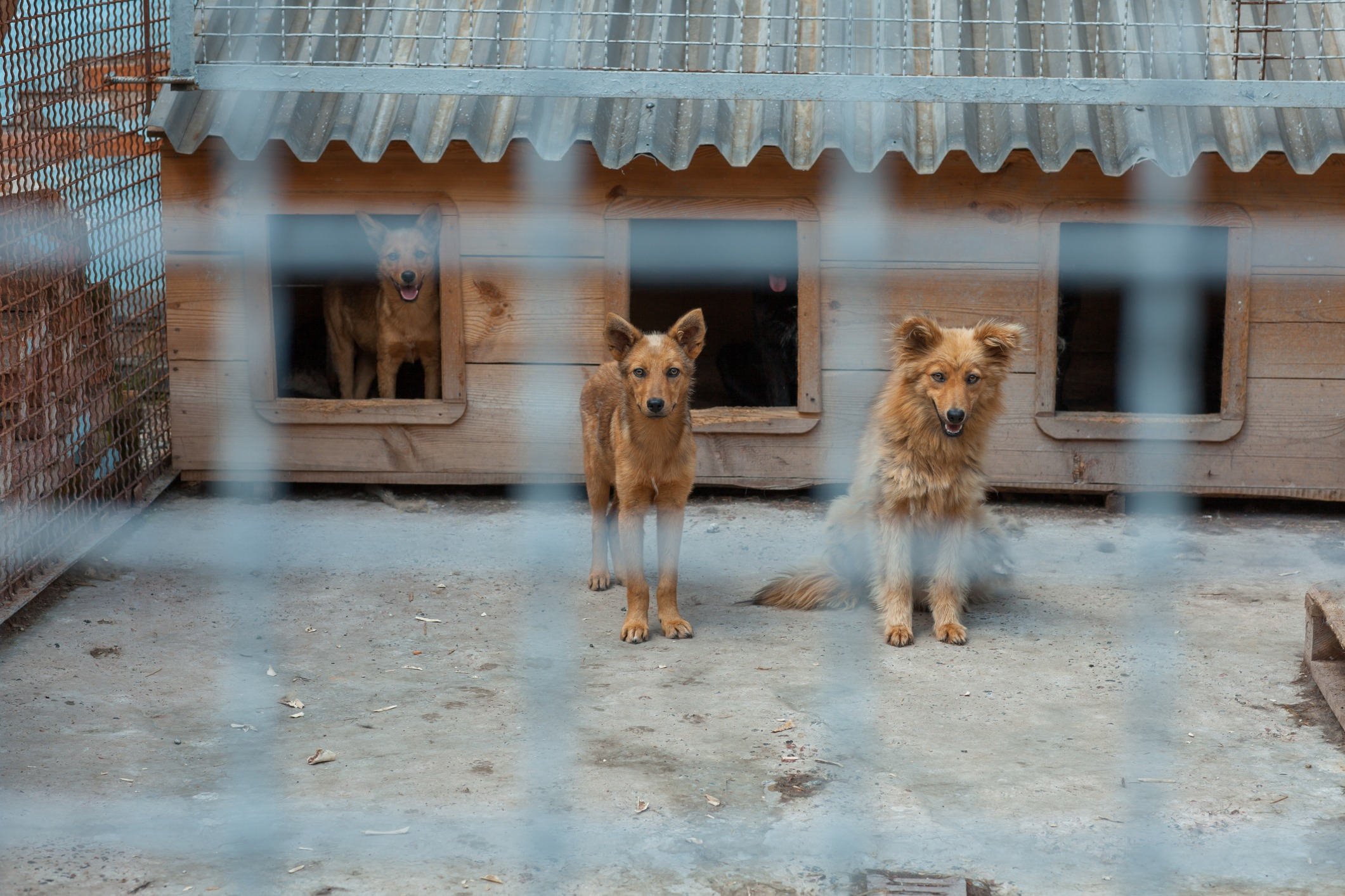 Dogs in cage waiting to be rescued