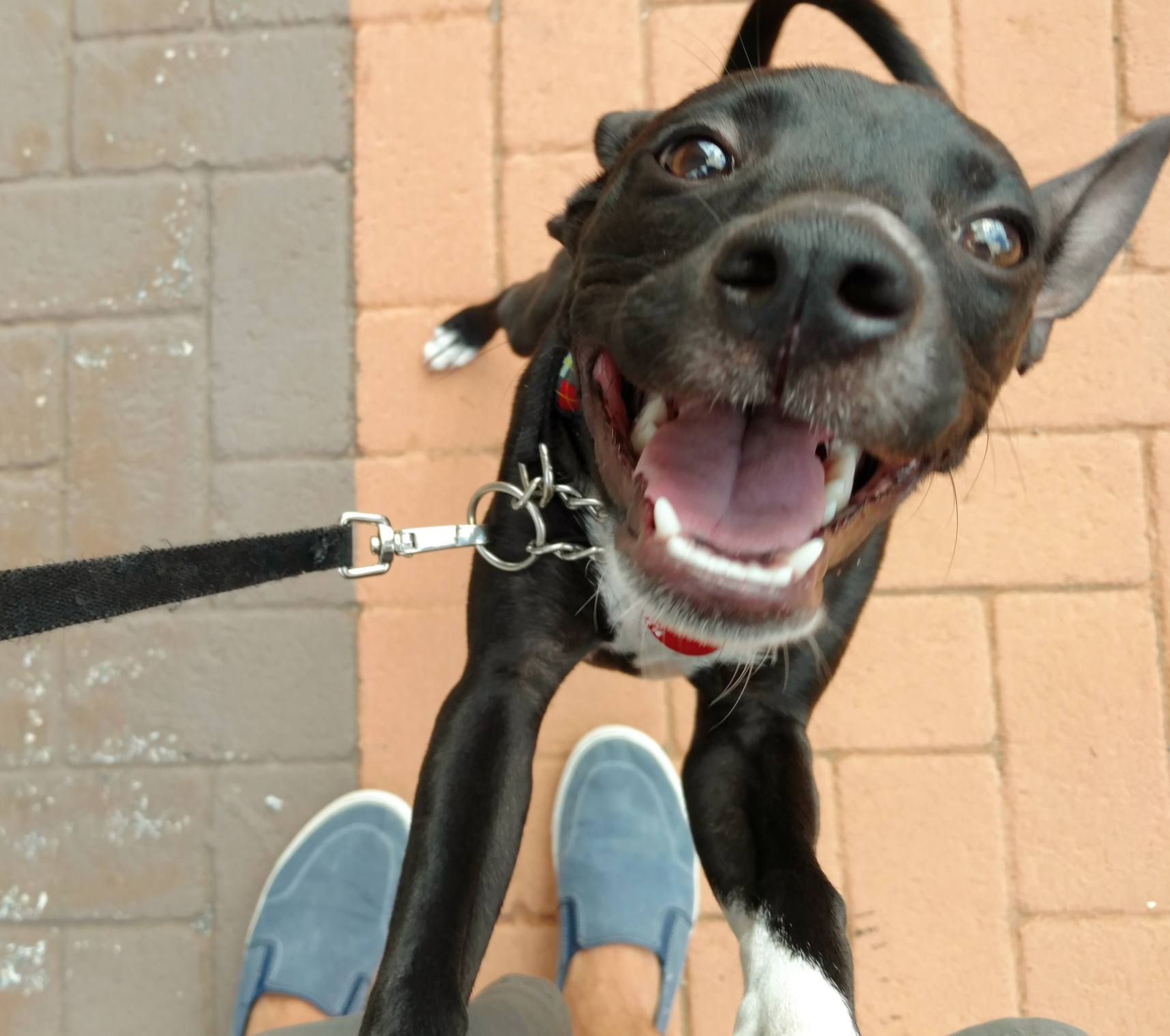 Happy Dog Standing Up and Smiling