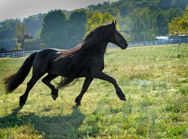 Why Everyone's Falling in Love With the World's Most Handsome Horse
