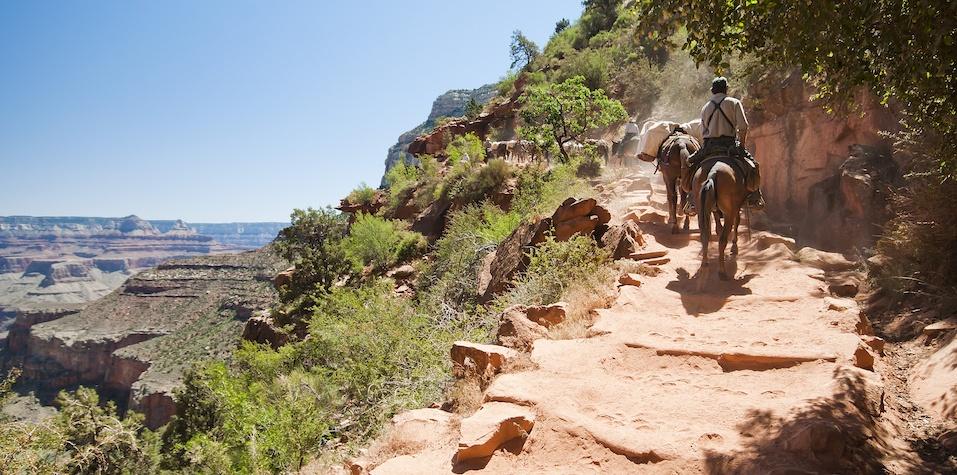 Grand Canyon - Mules
