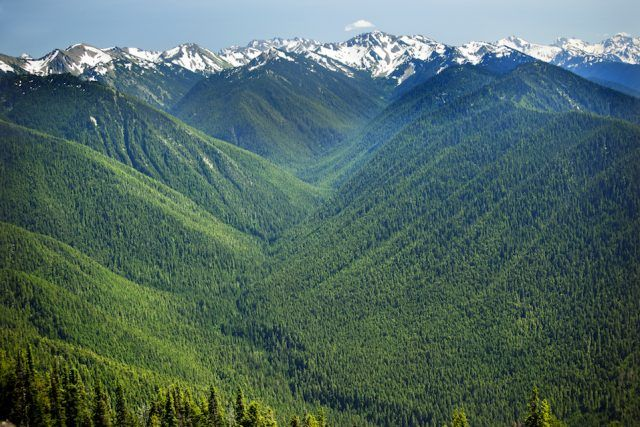 Green Valleys Snow Mountains Hurricane Ridge Olympic National Park Washington