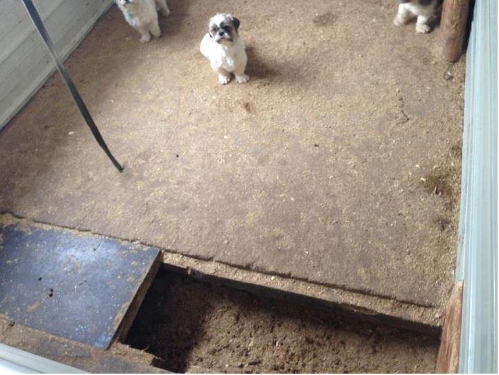 Puppy mill wisconsin