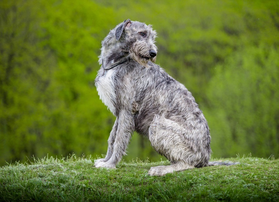How Come Some Breeds Of Dogs Have Certain Health Problems