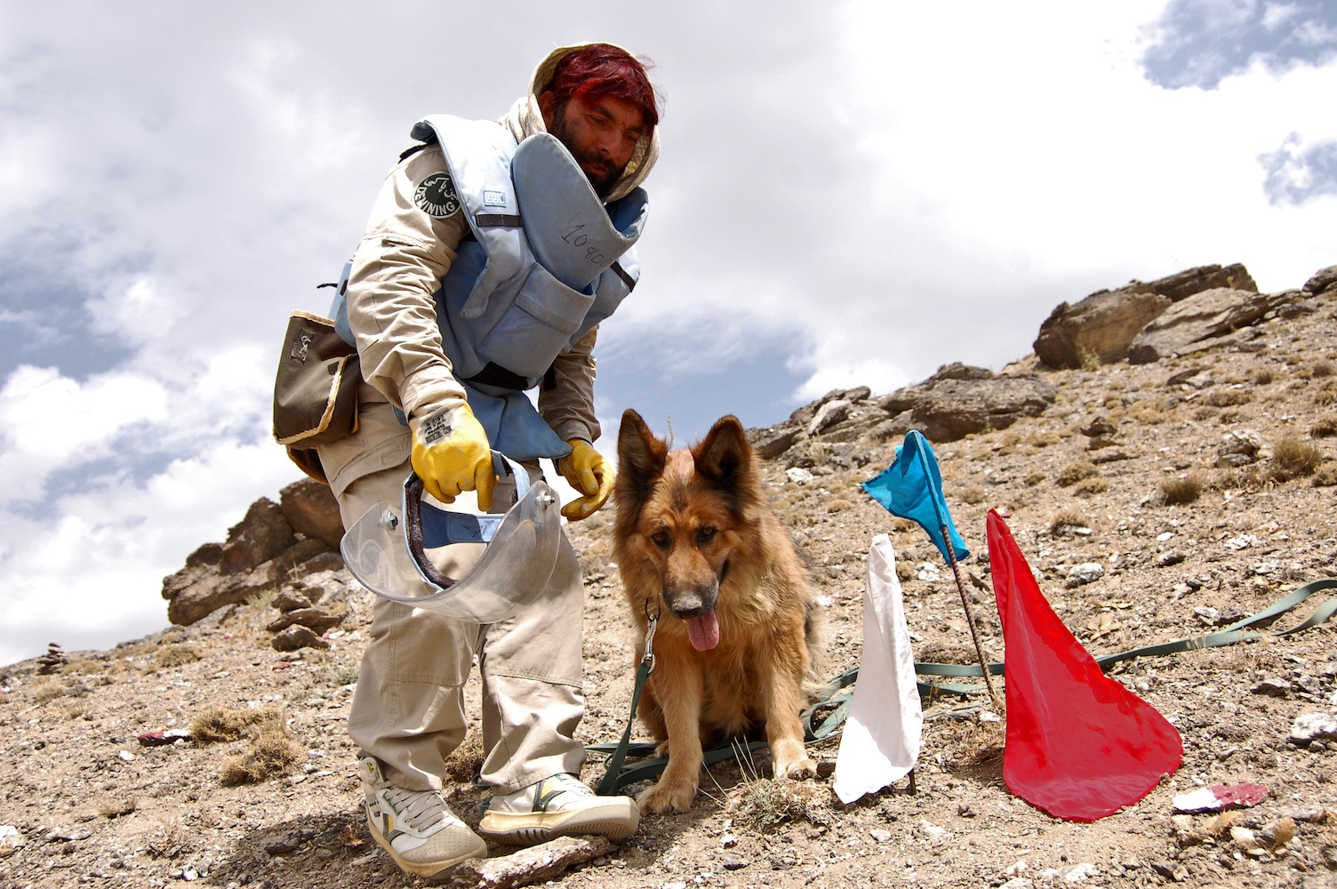 Landmine sniffing military dog