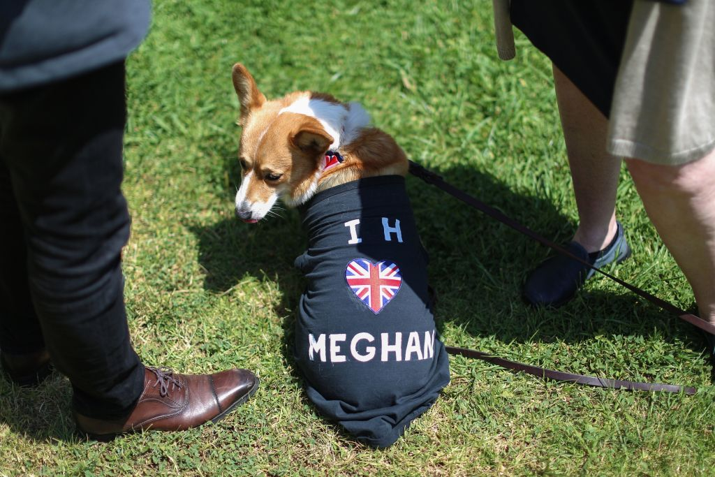 Dog wearing a shirt for Meghan Markle